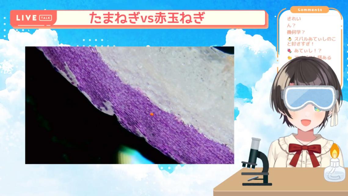 【夏休み自由研究】顕微鏡配信しゅばあああああああ!!!!/Stream to see the micro world with a microscope【ホロライブ/大空スバル】